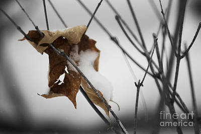 Photograph - Old Leaf by JT Lewis