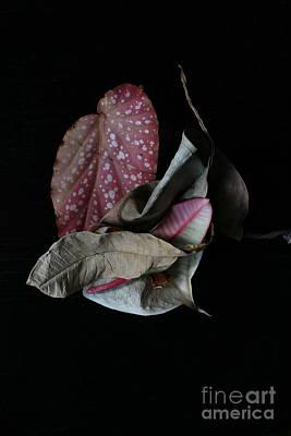Old Leaves. Print by Tanya Polevaya