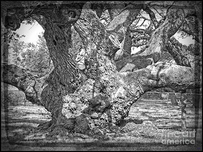 Photograph - Old Live Oak - Silent Witness by Ella Kaye Dickey