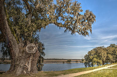 Photograph - Old Live Oak Tree by Dale Powell