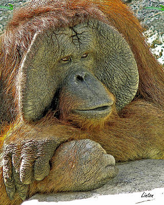 Orangutan Digital Art - Old Man Of The Forest by Larry Linton