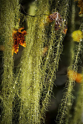 Photograph - Old Man's Beard Lichen by Belinda Greb