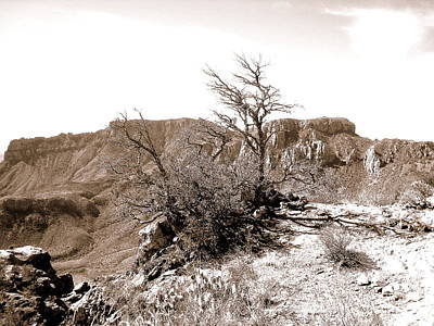 Photograph - Old Mine Trail by Rosemarie Hakim