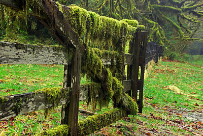 Photograph - Old Mossy Fence by Deanna Proffitt