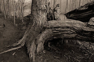 Photograph - Old Oak 2 by Jim Vance