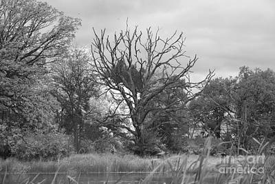 Photograph - Old Oak At The Pond by David Bearden