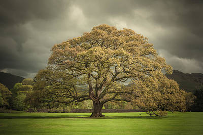 Large Oak Tree Photograph - The Old Oak Of Glenridding by Chris Fletcher