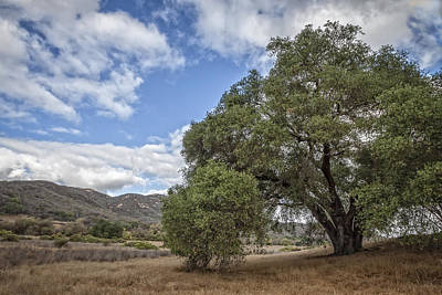 Photograph - Old Oak by Dave Hall