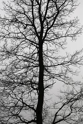 Old Oak In The Grey Sky.  Art Print by Tanya Polevaya