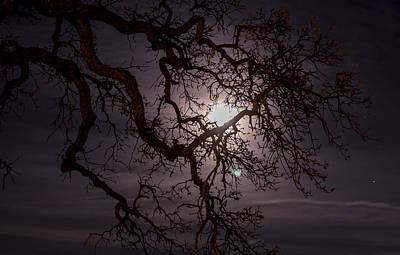 Jimerson Photograph - Old Oak Tree by Wes Jimerson