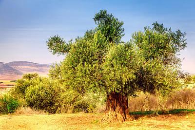 Old Olive Tree Art Print