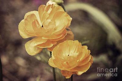 Duke Gardens Photograph - Old Orange Poppies by Emily Kay