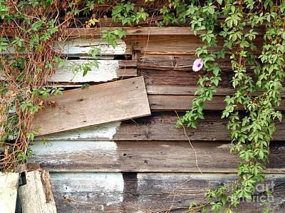 Photograph - Old Overgrown Woodshack by Yali Shi
