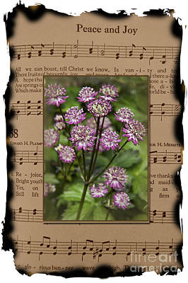 Photograph - Old Peace And Joy Hymn With Burned Edges Star Of Beauty Flowers by Valerie Garner