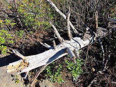 Oldrag Photograph - Old Rag Hiking Trail - 121243 by DC Photographer