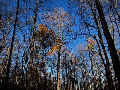 Shenandoah Photograph - Old Rag Hiking Trail - 121254 by DC Photographer