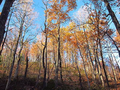 Hike Photograph - Old Rag Hiking Trail - 121258 by DC Photographer