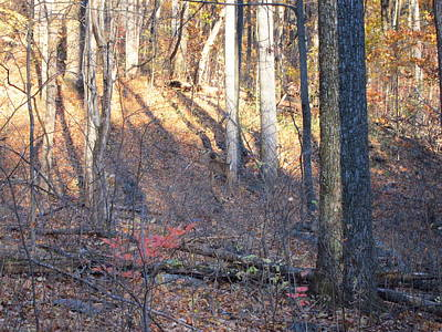 Oldrag Photograph - Old Rag Hiking Trail - 121263 by DC Photographer