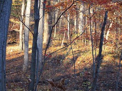 Old Rag Hiking Trail - 121266 Art Print