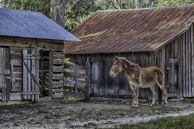 Old Red Mule Art Print by Lynn Palmer
