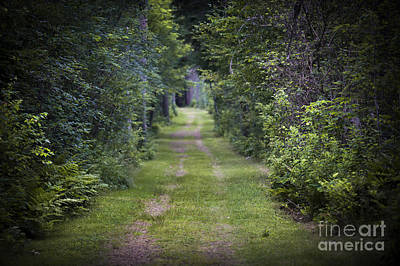 Photograph - Old Road Through Forest by Elena Elisseeva