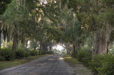 Photograph - Old Road With Live Oaks by Bradford Martin