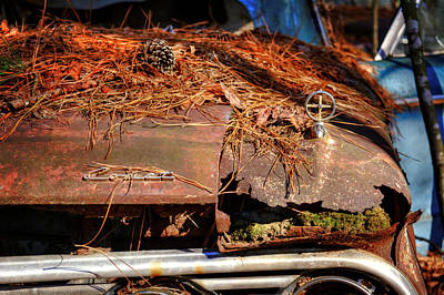 Pine Needles Photograph - Old Rusty Mercury Comet by Greg Mimbs
