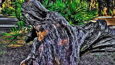 Photograph - Old Stump by Richard Zentner