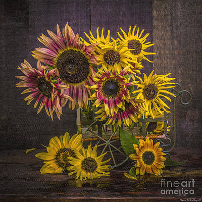 Sunflowers Royalty-Free and Rights-Managed Images - Old Sunflowers by Edward Fielding