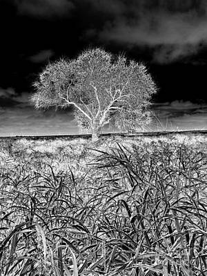 Photograph - Old Texas Fields by Alexander Van Berg