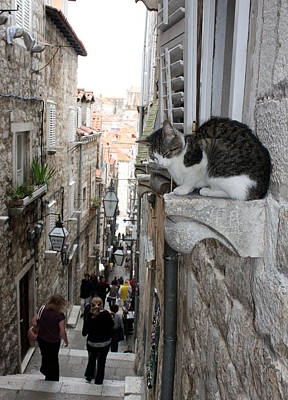 Photograph - Old Town Alley Cat by David Nicholls