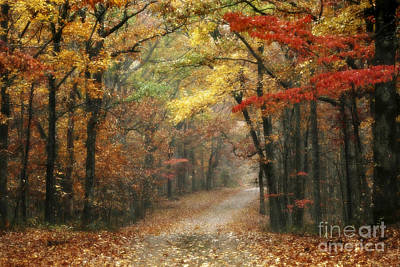 Leipers Fork Photograph - Old Trace Fall - Along The Natchez Trace In Tennessee by T Lowry Wilson