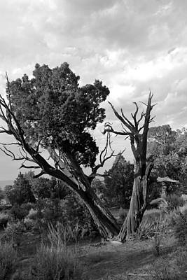 Photograph - Old Tree 4 Colorado National Monument Bw by Mary Bedy