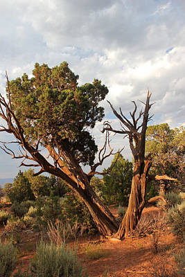 Photograph - Old Tree 4 Colorado National Monument by Mary Bedy