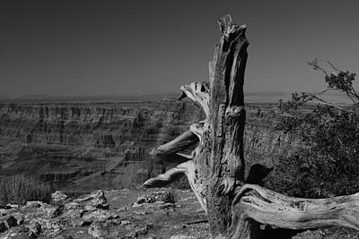 Photograph - Old Tree At Grand Canyon by Robert  Moss