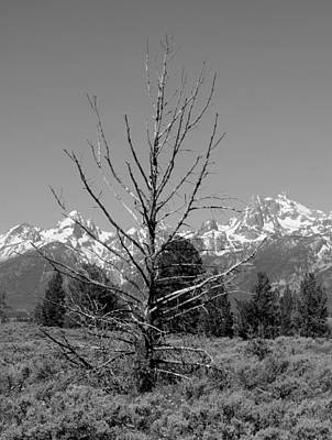 Photograph - Old Tree At Tetons by Robert  Moss