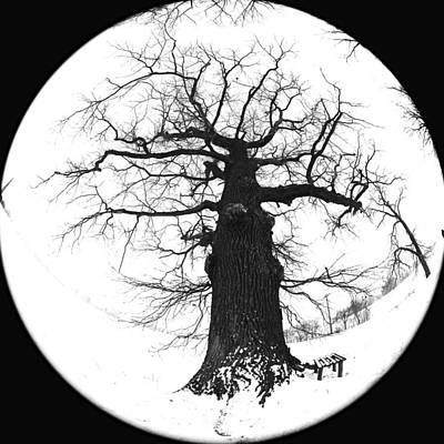 Old Tree Art Print by Falko Follert