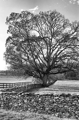 Art Print featuring the photograph Old Tree In Black And White by John S