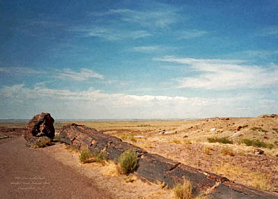 Photograph - Old Tree In The Road. Petrified Forest National Park by Connie Fox