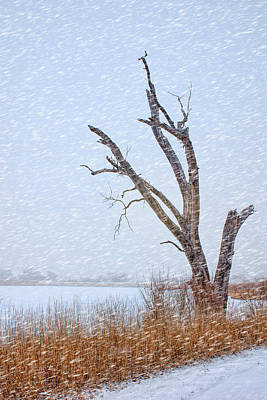 Papillion Photograph - Old Tree In Winter by Nikolyn McDonald