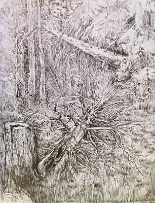 Drawing - Old Tree by Iya Carson