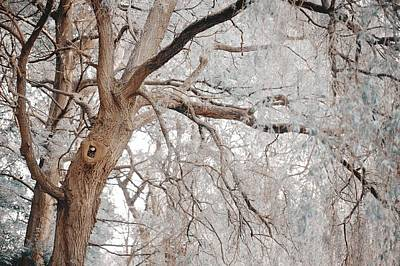 Photograph - Old Tree. Nature In The Alien Skin by Jenny Rainbow