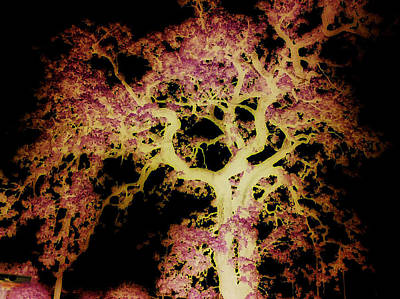 Old Tree New Bark Art Print by Max Mullins