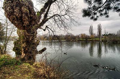 Photograph - Old Tree by Oleksandr Maistrenko