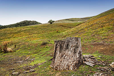 Old Tree Stump Art Print by Purple Moon
