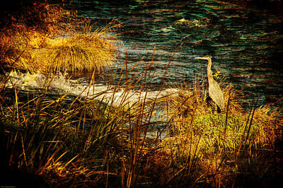 Photograph - Old View Heron Watch by Mick Anderson