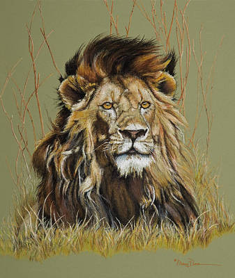 Pastel - Old Warrior African Lion by Mary Dove