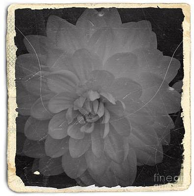 Mixed Media - Old White Dahlia Bw 2 by Chalet Roome-Rigdon
