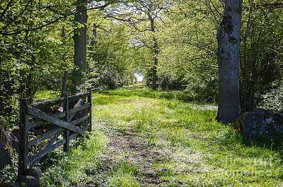 Photograph - Old Wooden Gate At A Fresh And Shiny Green Rural Road Through A  by Kennerth and Birgitta Kullman