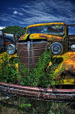 Photograph - Old Yeller by Ken Smith